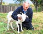 Inusitado? Brasileiro casa com cabra em Igreja do Diabo