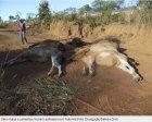 Mula de R$ 300 mil está entre seis animais mortos por asfixia no TO.